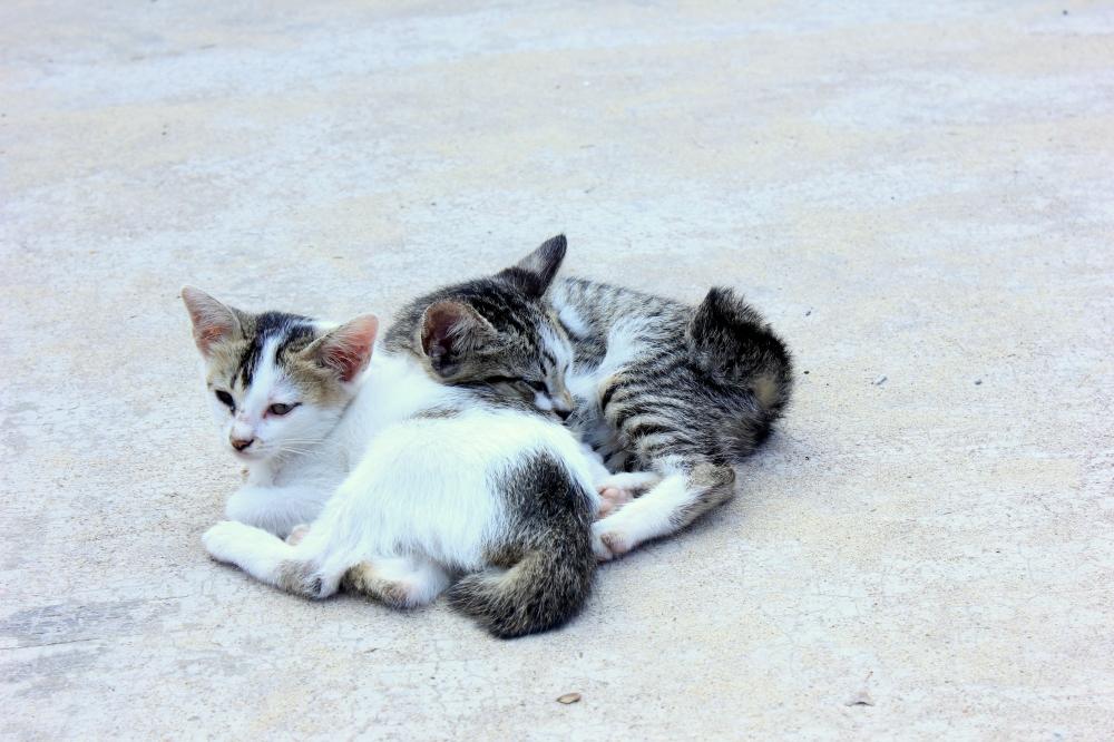 Mistress Meow and Zebrapus